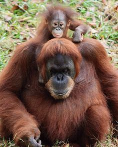 Pin Auf Cute Save Us Don T Buy Palm Oil Products