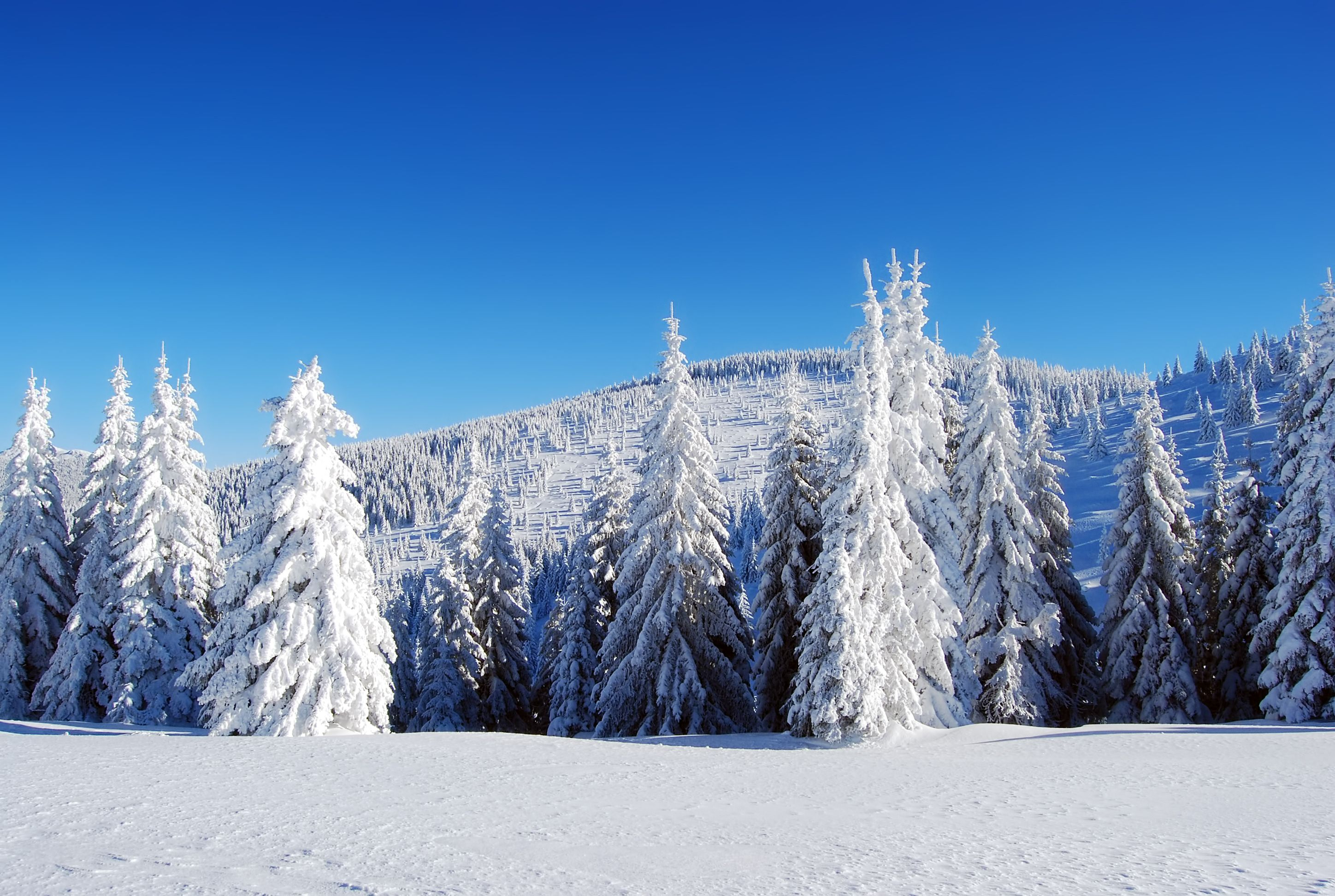 Fir Forest Freeze Hill Nature Outdoor Pine Pines Snow Snowy Tree Winter Landscape Mountain Background Bea Winter Landscape Snowy Mountains Snowy