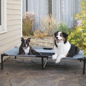 5 below dog beds, 5 dollar dog beds, 5 star dog beds, a dogs life beds, b dog beds, b&m dogs beds, b&q dog beds, beds 4 dogs, beds 4 dogs hundebetten, best dog beds 2013, best dog beds 2014, big r dog beds, big w dog beds australia, big w dogs beds, cats on dogs beds video,