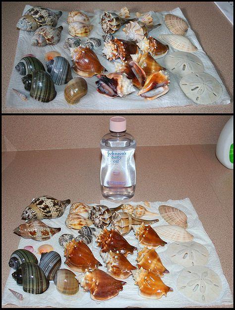 Limpiar conchas marinas 3