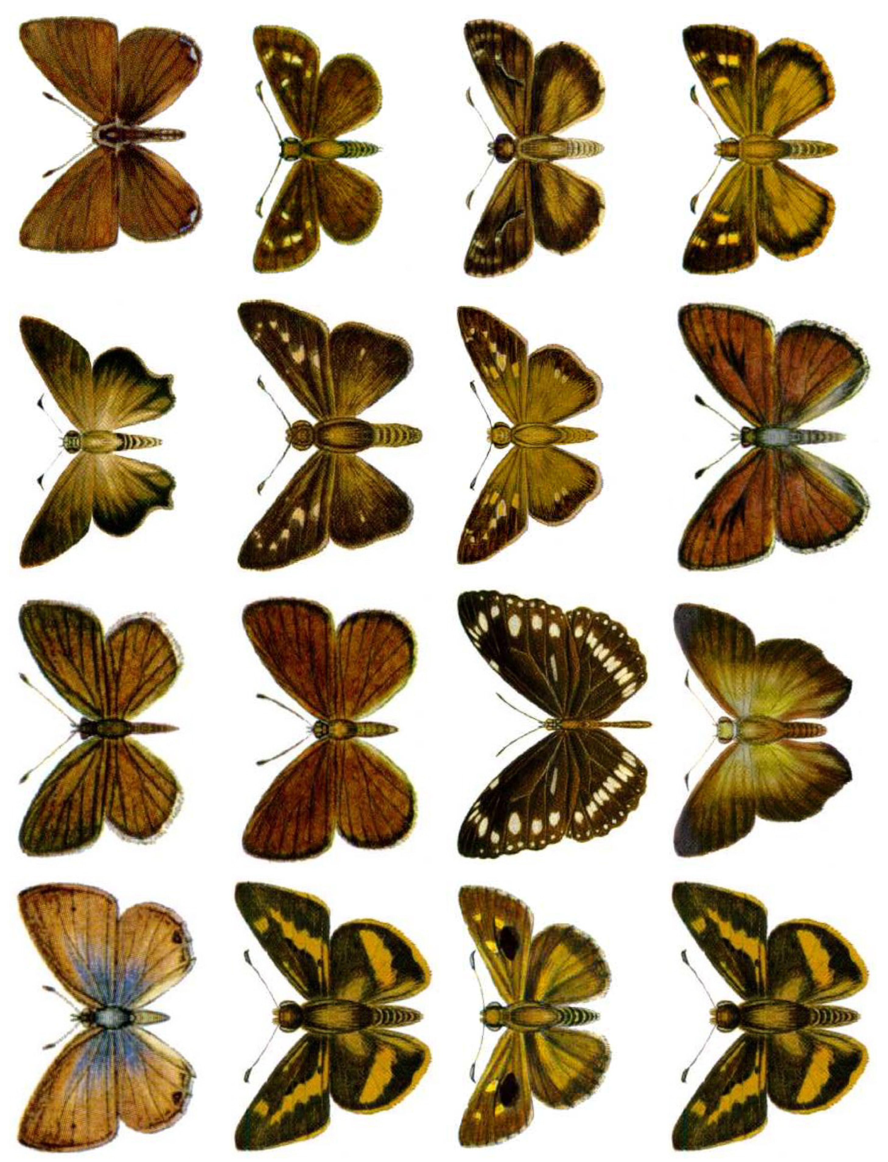 http://photos.imageevent.com/imagesbykim/traderscorner/printablecollagesheets/49%20Set%20of%2016%20Butterflies.jpg