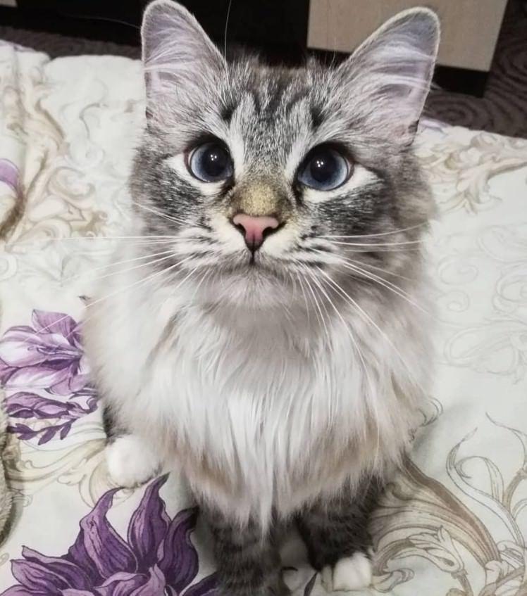 180 Nature Cat Names | Cats | Cat names, Cats, Most popular
