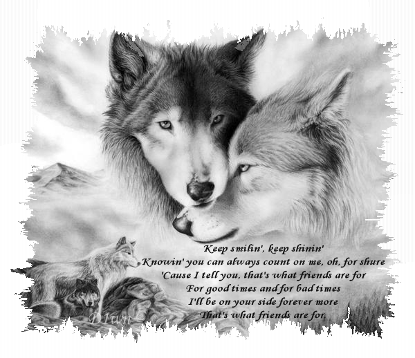 Forever Wolves Cool Wolf Drawings Wolf Wallpaper Wolf Love