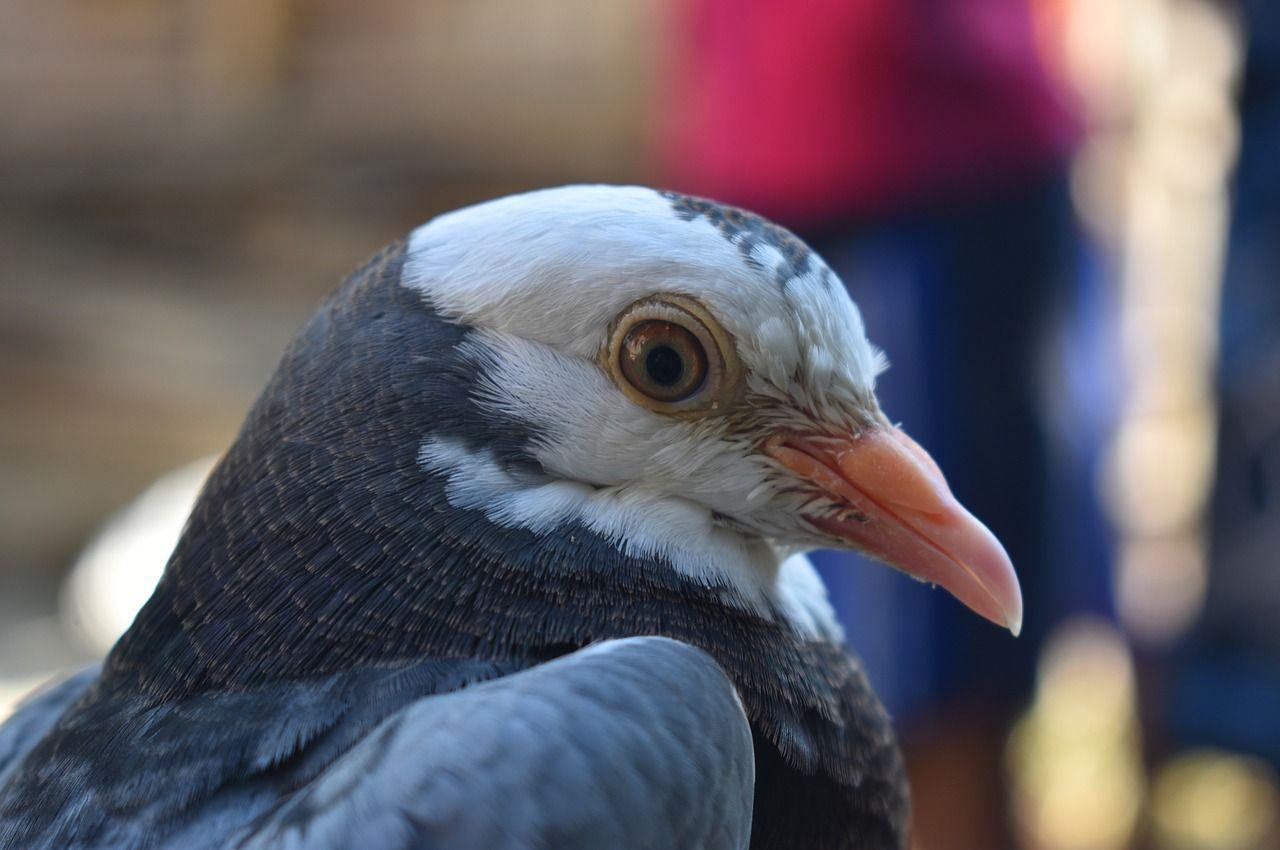 obrázky zdarma ptáka