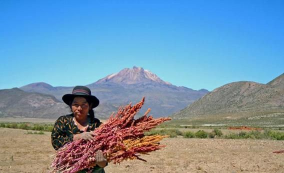 The idea that worldwide demand for quinoa is causing undue harm where it's produced is an oversimplification at best