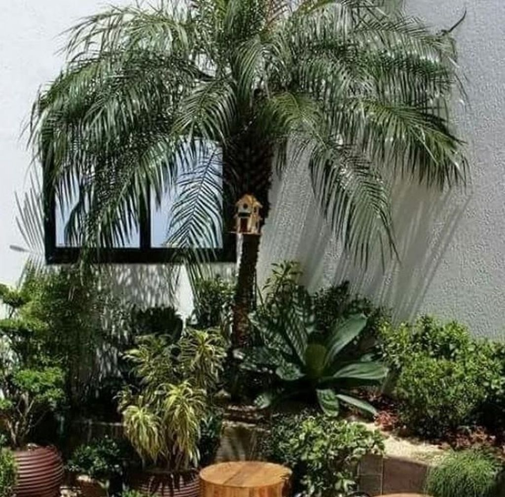 30+ Cute Palm Gardening Ideas For Front Yard - TRENDECORS - Florida landscaping ideas front yards - #Cute #florida #Floridalandscapingideasfrontyards #front       If you want to relax outside in the summer after gardening, you often long for cooling down. A swimming opportunity turns the garden into a paradise. At any time and undisturbed in a swimming pool to pull its tracks, promises pure relaxation. Before yo... #Cute #Florida #Front #Gardening #Ideas #Landscaping #palm #TRENDECORS #Yard