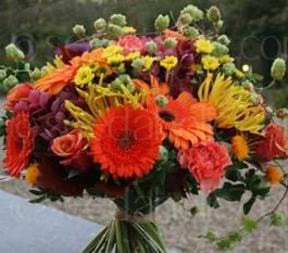 The Semi-Tall Cut Flowers, Annual Mix is a richly flowering mixture that produces large quantities of flowers for cutting.