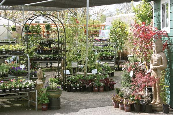 Down To Earth Garden Center 532 Olive Street Eugene Oregon Eugene Or Pinterest Garden
