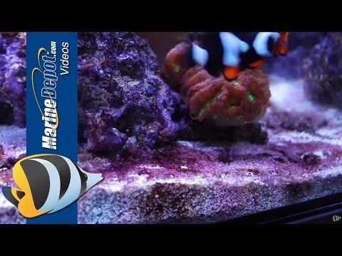How To Get Rid Of Cyanobacteria Red Slime Algae Mad Hatter S Reef Red Slime Slime Underwater Creatures