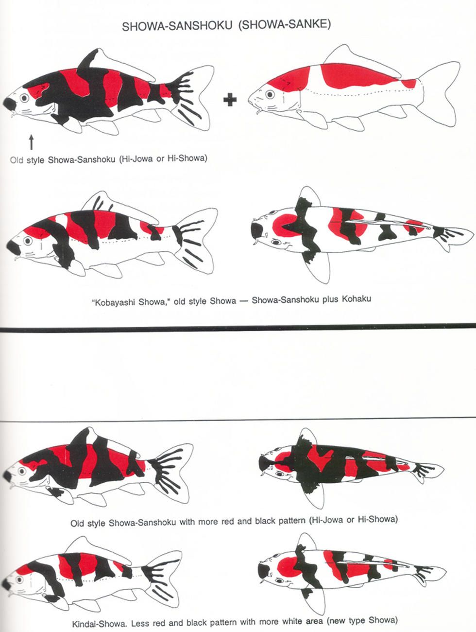 Pin koi chart on pinterest for Koi fish color meaning chart