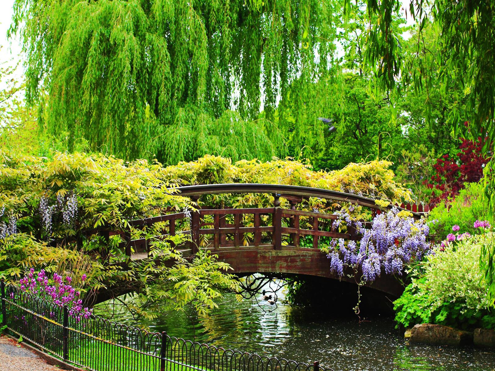 Beautiful Asian garden inspiration. | Gardening | Pinterest | Asian ...