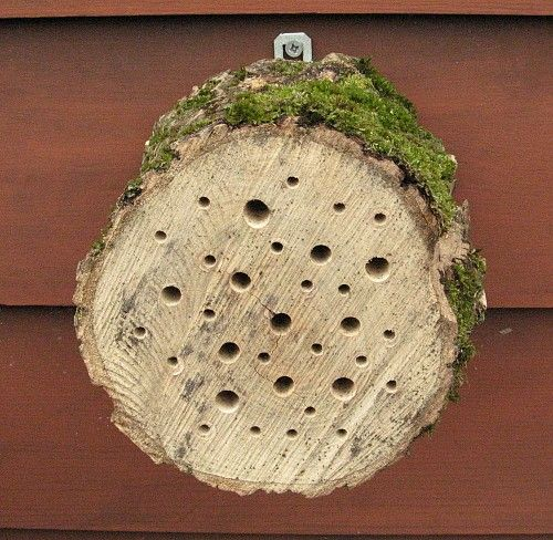 Hoe bouw je zelf een insectenhotel. - Plazilla.com