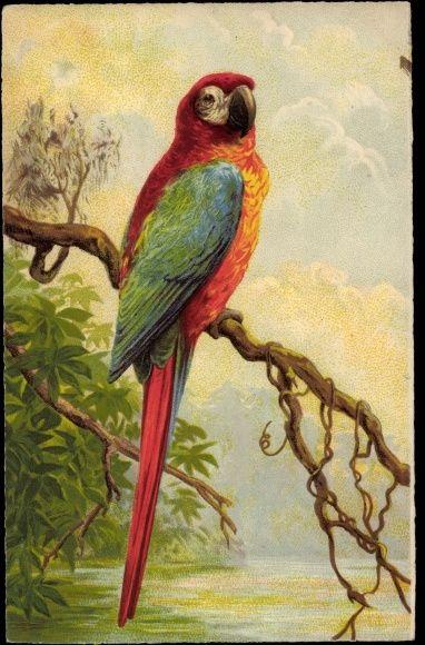 Kunstler Ansichtskarte Postkarte Papagei Mit Buntem Federkleid