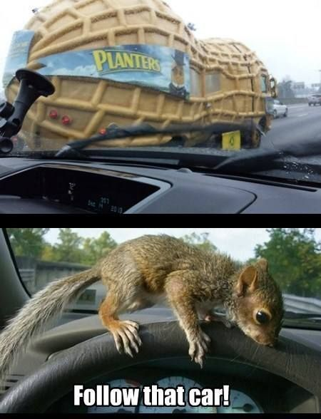 It S Monday But At Least You Didn T Have To Deal With This On Your Morning Commute Squirrelmemes Squirrel Funny Squirrel Memes Squirrel