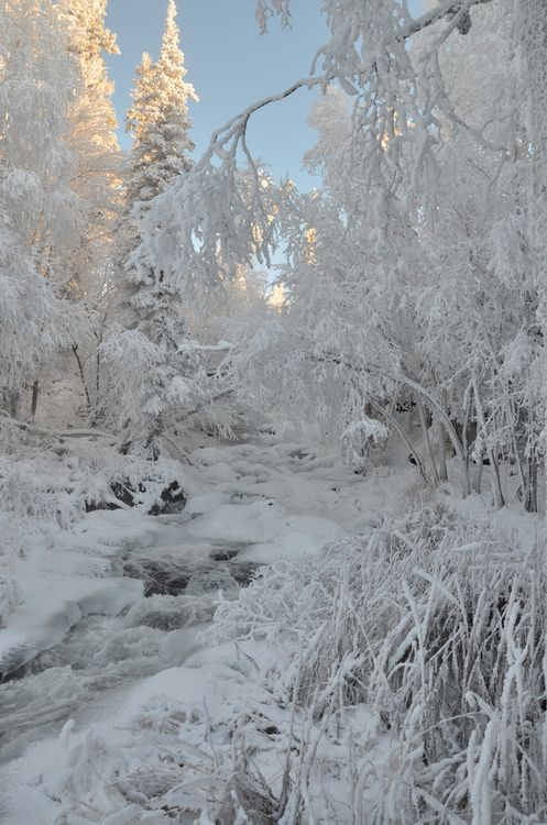 Northwest Territories, Canada, magical ice and snow landscape, flocked trees and frozen river