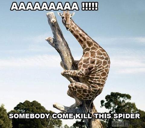 Spider Animais Bebes Mais Fofos