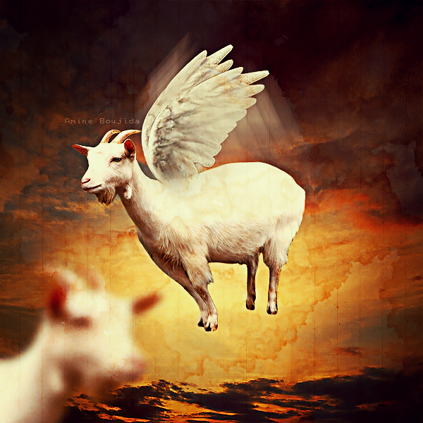 flying goat by Aminebjd.
