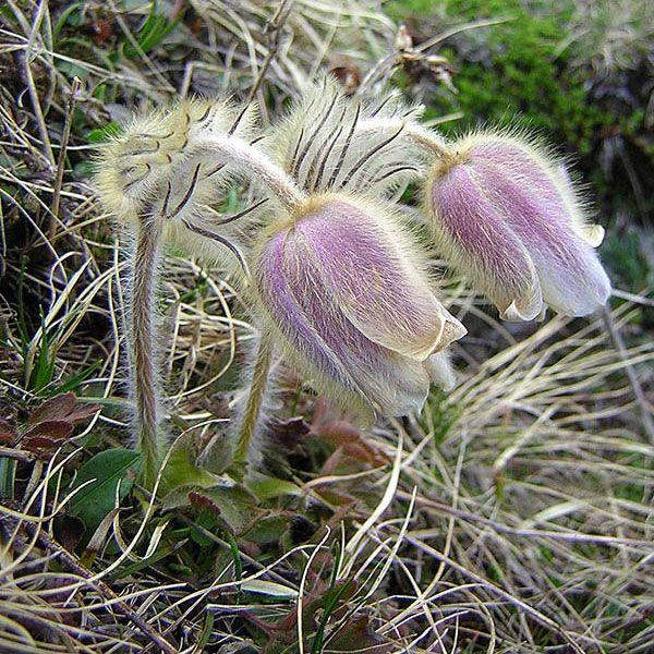 plantera blommor mars