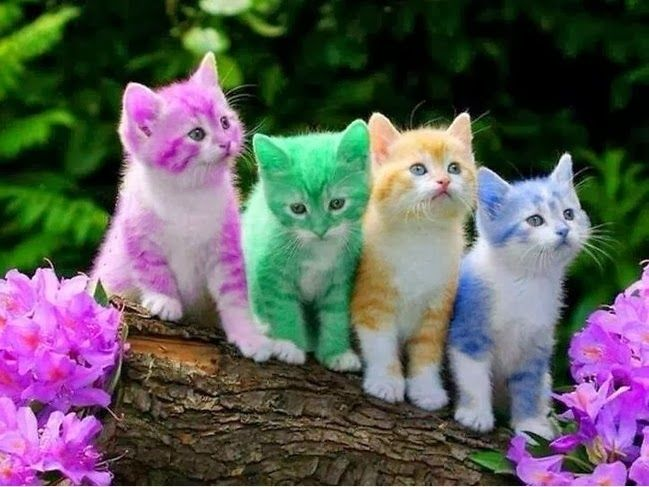 Colorful Kittens cute animals colorful cat kitten kitty cute ...