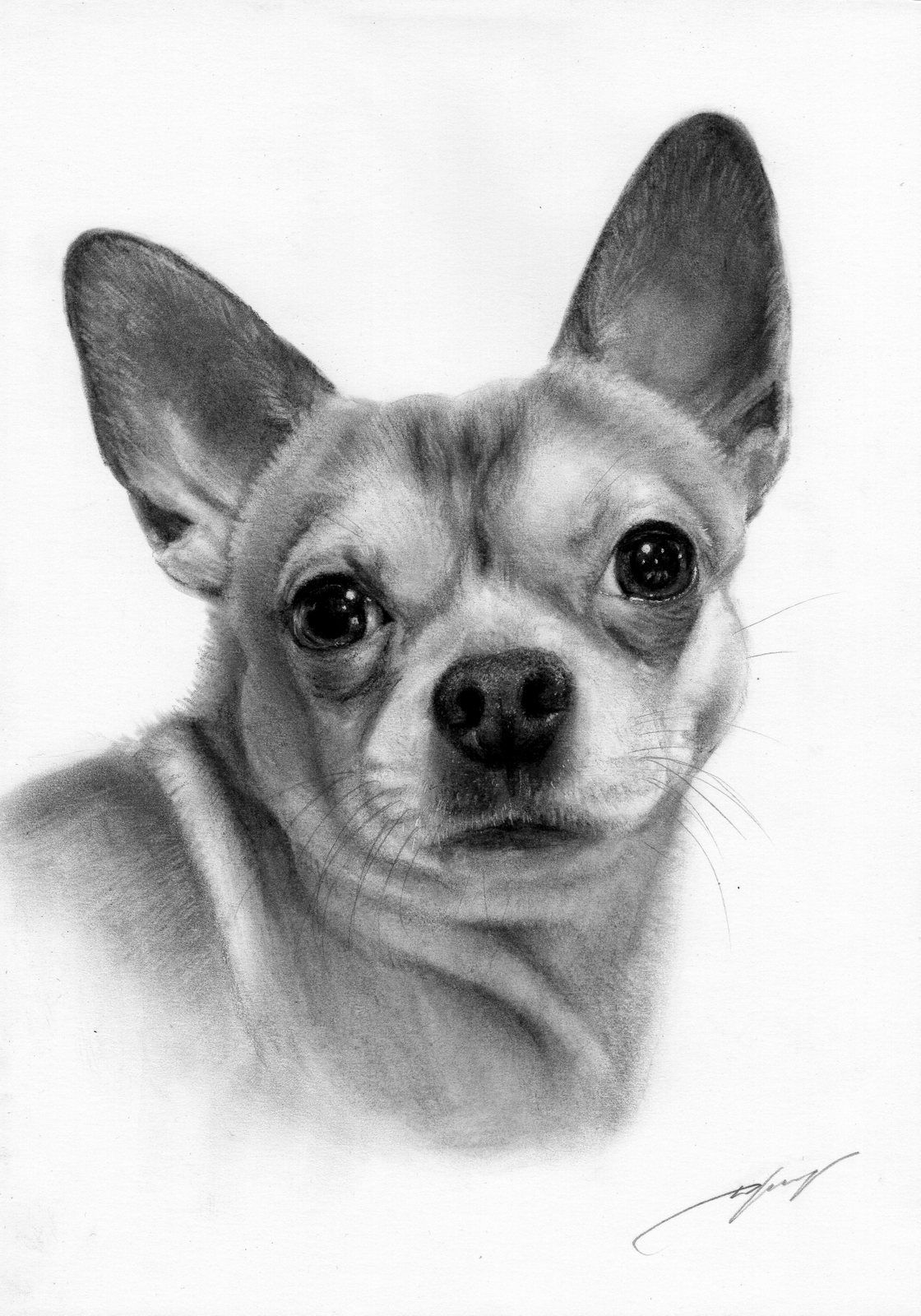 Realistic Art By Danguole Serstinskaja Chihuahua Drawing Cat