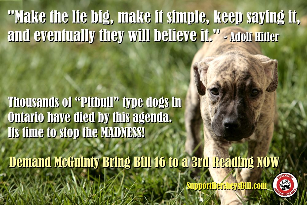 The Simple lie of BSL Dogs, Pitbull types, Family dogs