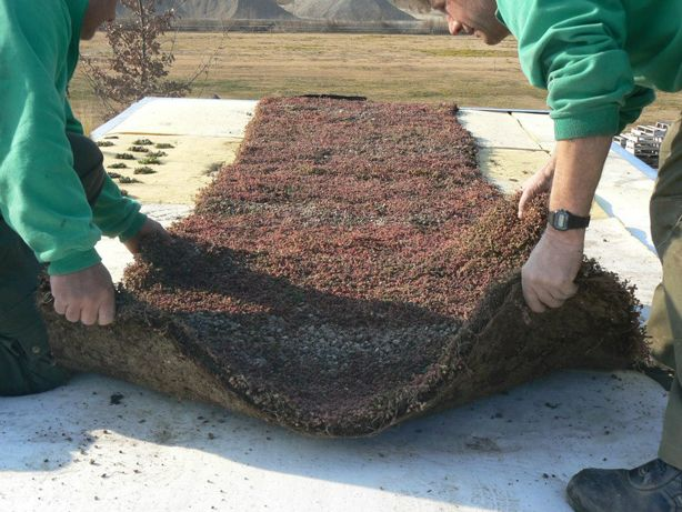 This Is A Lightweight 7 Centimeter Thick Hydroponic Foam Which Is Much Lighter Than Soil Thereby Significantly Redu Green Roof Green Roof System Hydroponics