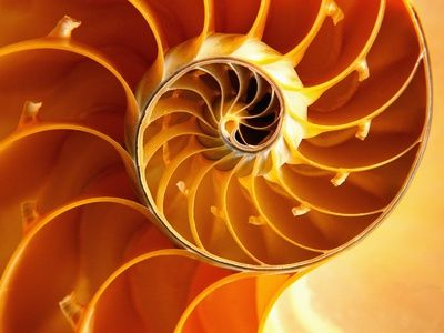 The Fibonacci Numbers and Golden section in Nature