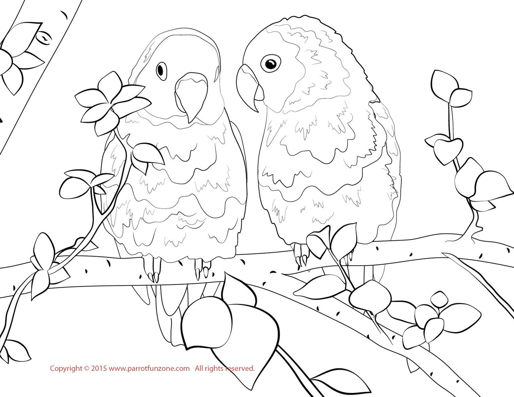Lovebird Coloring Page Love Coloring Pages Bird Coloring Pages Coloring Pages