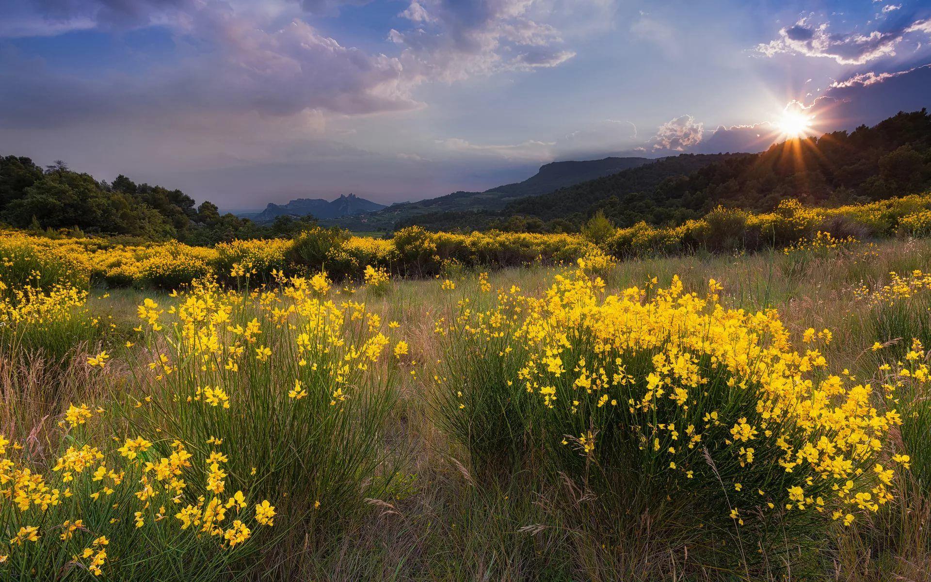 лето природа красивые фото: 11 тыс изображений найдено в ...