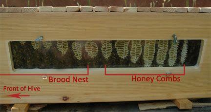 BackYardHive.com   Harvesting Honey From A Top Bar Hive