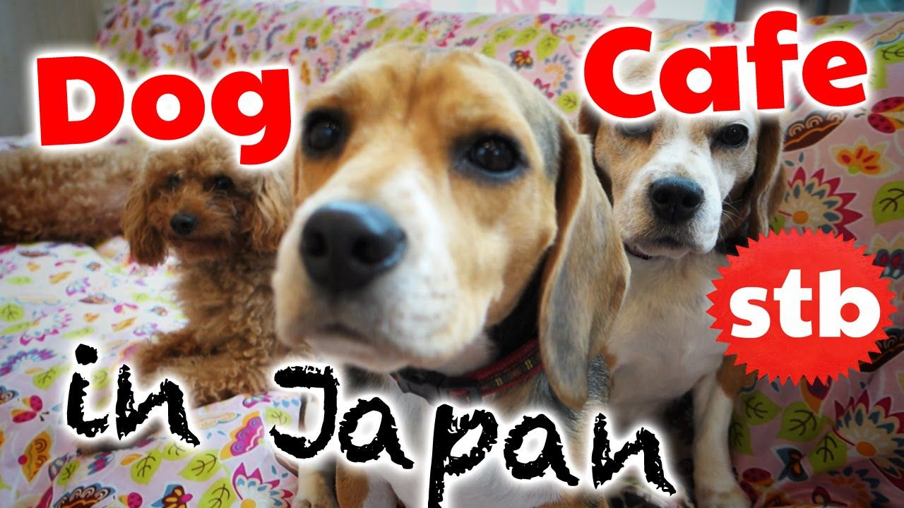 Japanese Dog Cafe Rent Pet A Cute Dog Solotravelblog