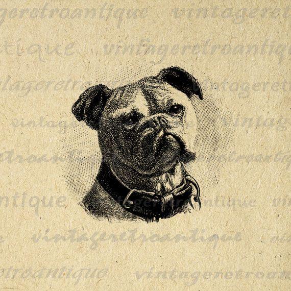 Printable Image Bulldog Graphic Dog Download Digital Vintage Clip Art for Transfers Printing etc HQ 300dpi No.648