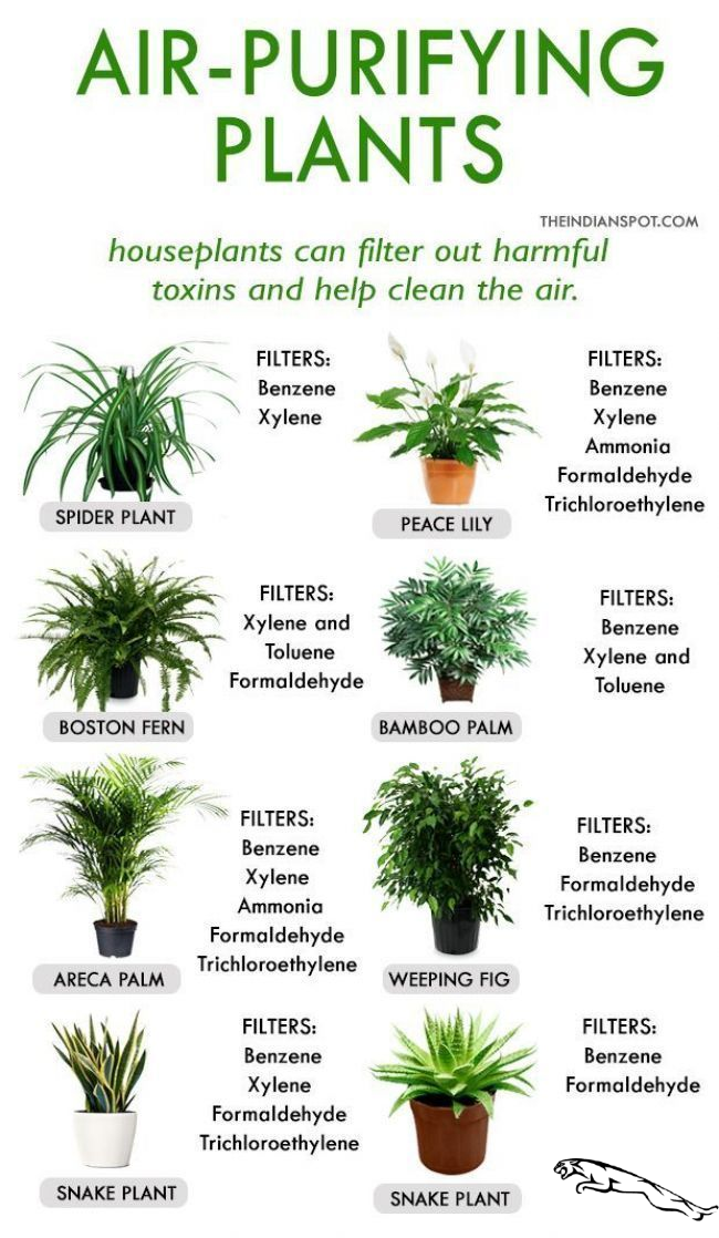 House cleaning through these plants # Home remedy #r - Conservatory ideas house cleaning through these plants # home remedy #r / #this #by #House cleaning     The market in cactus house plants is booming and with very good reason. These prickly little guys are great fun, easy to keep and very attractive. How come so many individuals ignore them?  ... #cactus art #cactus decor #cactus garden #cactus indoor plant #cactus plants #Cleaning #conservatory #Garden #Homeremedy #house #Ideas #plants