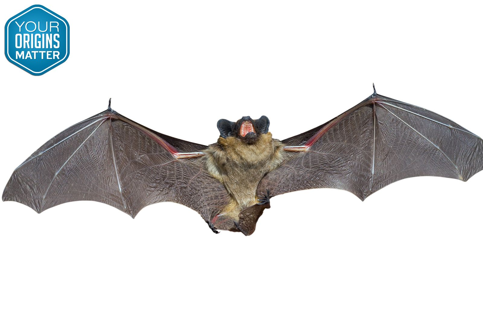 Did You Know Bats Send Out A Pulse At 100 000 Cycles Per