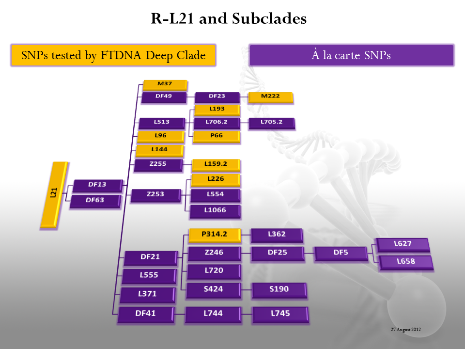 r l21 and subclades irish and celtic migrations dna r l21 and subclades
