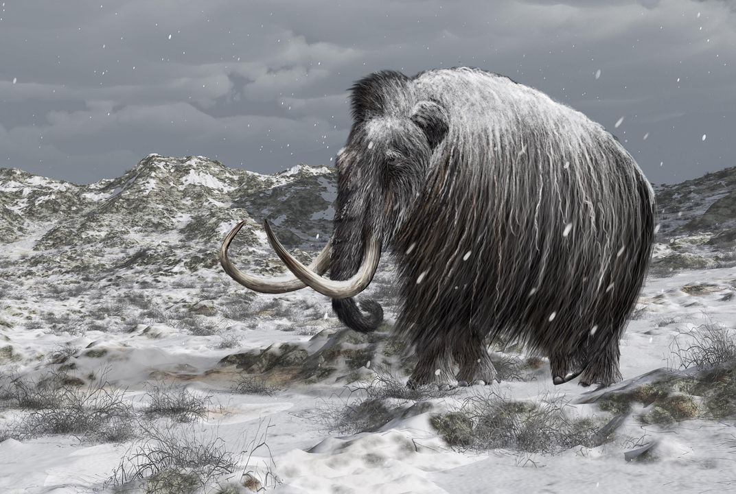 Can Bringing Back Mammoths Help Stop Climate Change