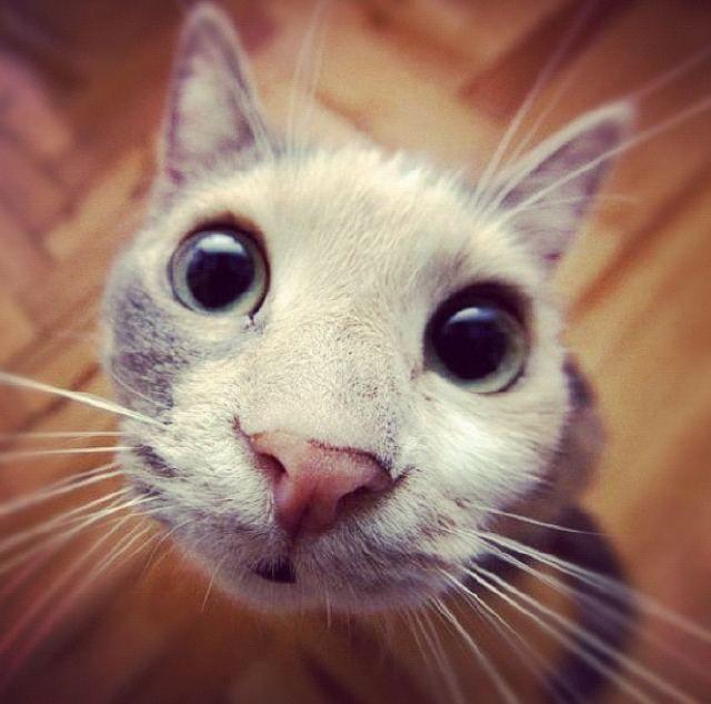 Yfrog Oops Crazy Cats Cat Fleas Cute Animals