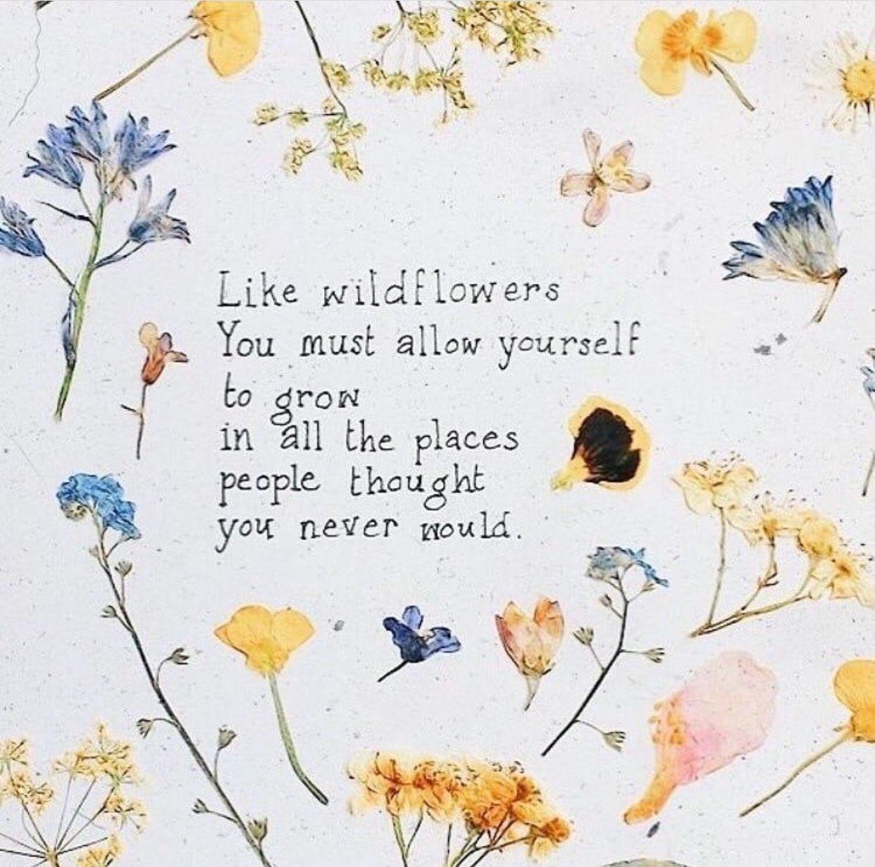 como flores silvestres você deve se permitir crescer em todos os lugares que as pessoas pensavam que você nunca faria #wildflowers