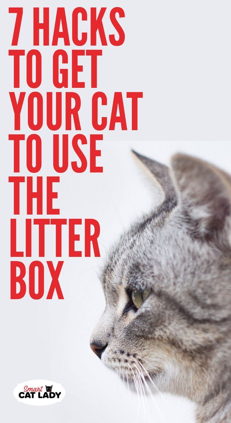 7 Hacks to Get Your Cat to Use the Litter Box Litter box