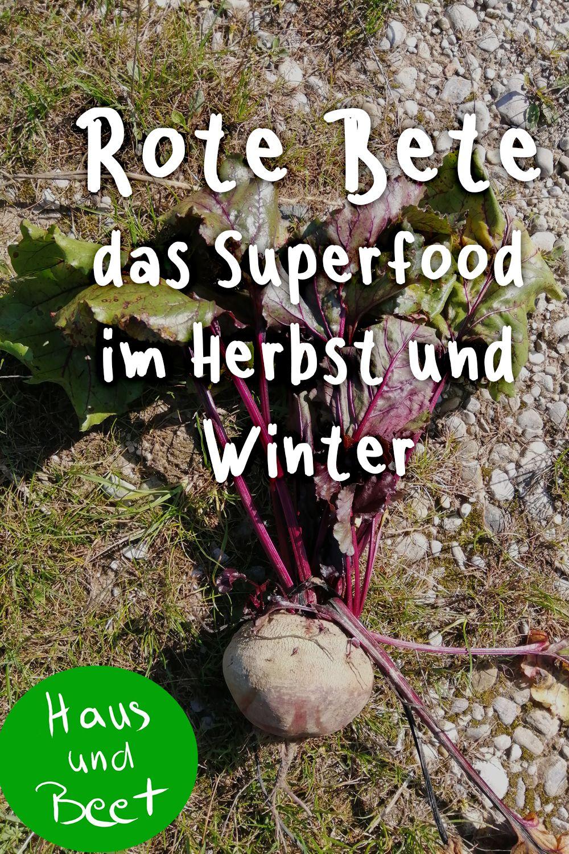 Rote Bete Das Herbstliche Regionale Superfood Superfood Selbstversorger Garten Und Rote Bete