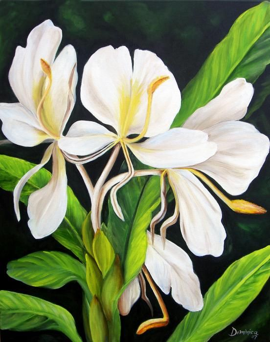 White Ginger By Dominica Alcantara Watercolor Flowers Floral Painting Flower Art