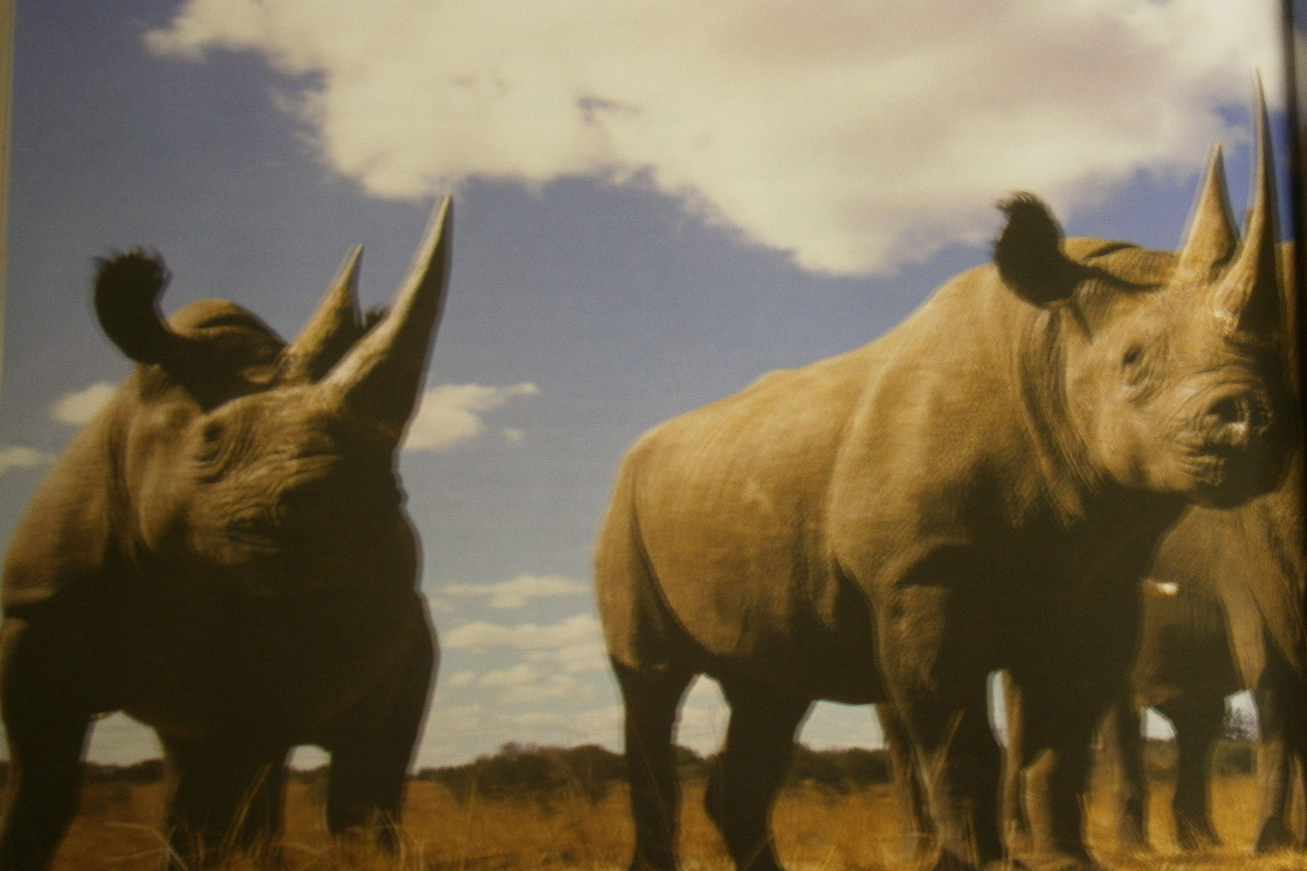 Características de los vertebrados: son un grupo de animales que se ...