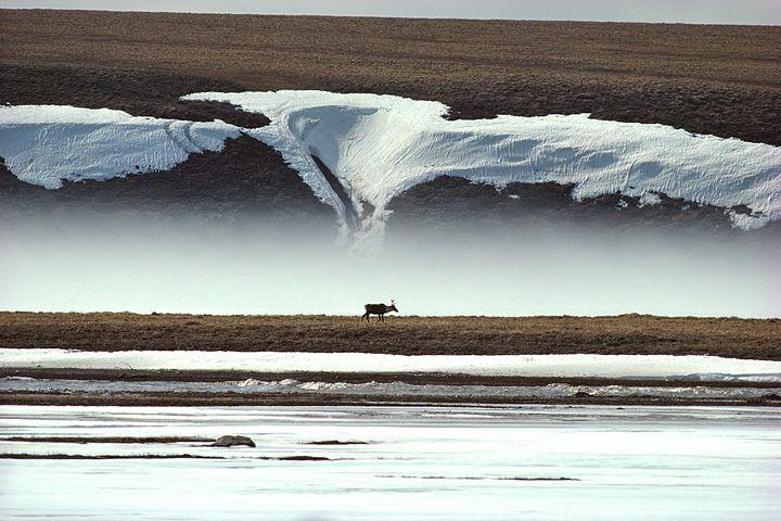Photo of アラスカに魅せられた写真家・星野道夫、没後20年の展覧会に約200点