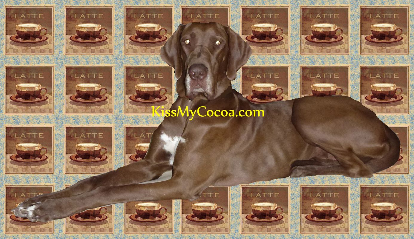 Chocolate Great Dane Great Dane Grand Dog Dane