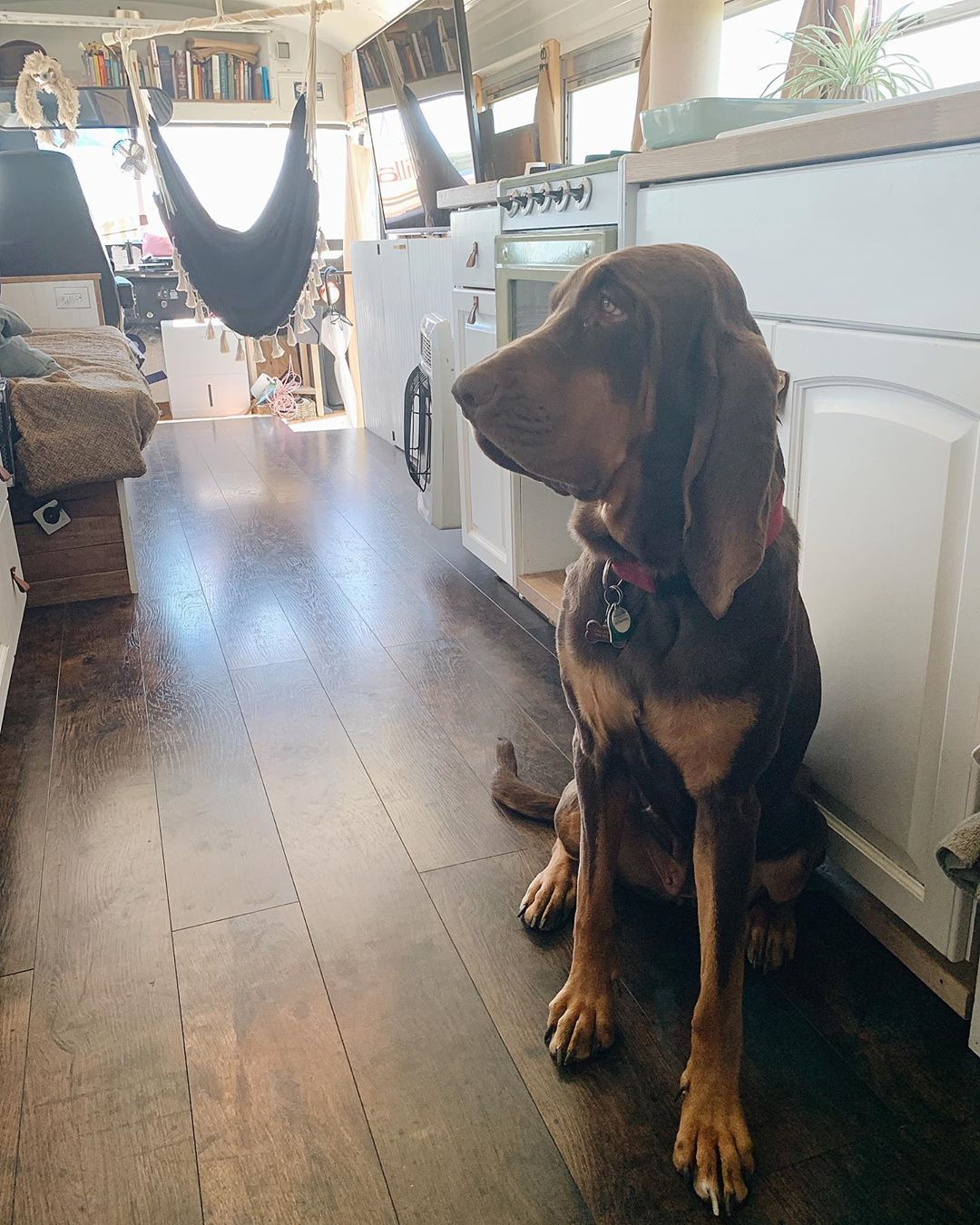 Pin On Pet Proof Flooring