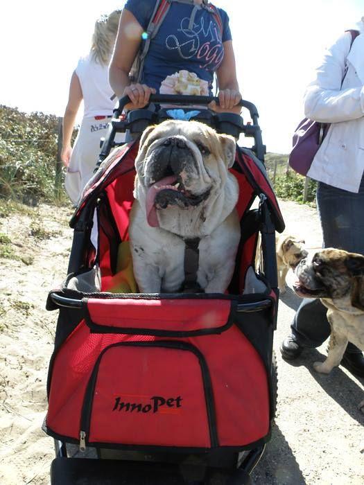(3) Baggy Bulldogs Rescue Nederland's Photos - Baggy Bulldogs Rescue Nederland