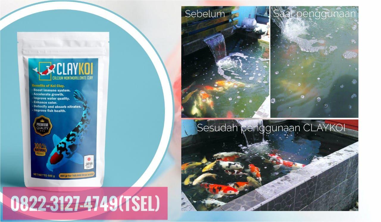 0822 3127 4749 Tsel Cara Menjernihkan Air Kolam Ikan Koi Claykoi Metro Di 2020 Kolam Ikan Koi Kolam Ikan Kolam