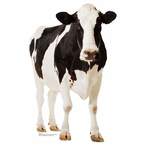 Cow Holsteins Puzzle 1000 Piece Jigsaw Puzzle for Adults Kids