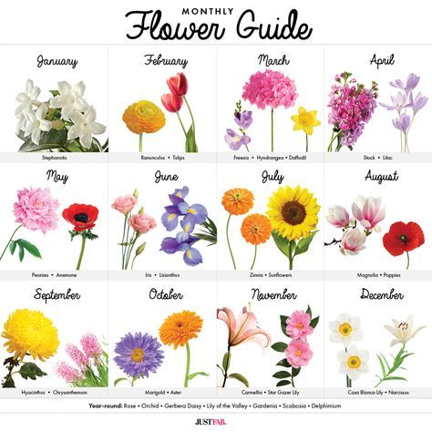 A Visual Guide to Wedding Flowers by Month
