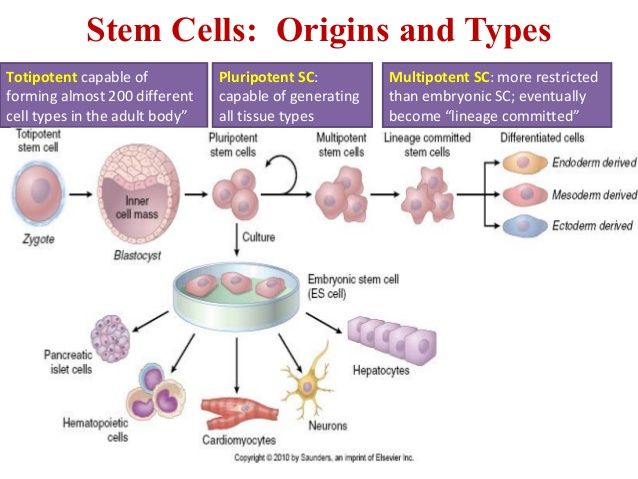 embryonic stem cell research thesis statement